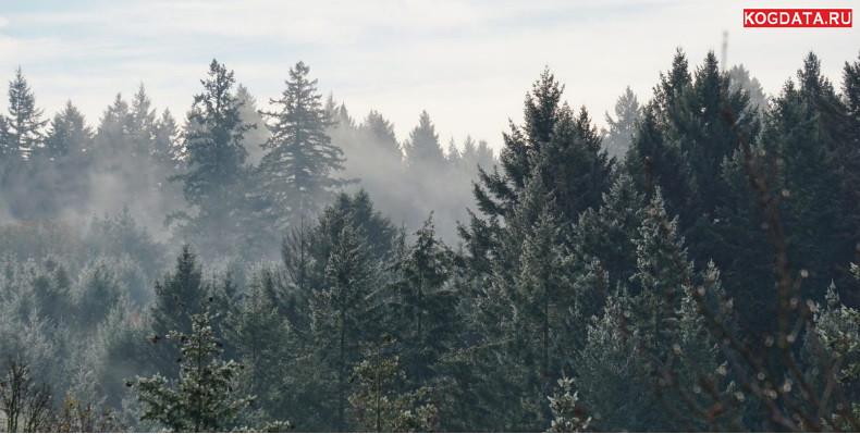 Растения и почва могут достичь лимита в поглощении углекислого газа